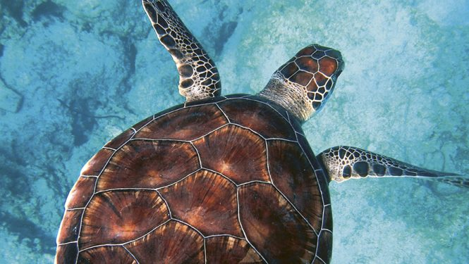 Entre la Papouasie-Nouvelle-Guinée et l'Australie. Des eaux si claires et pourtant meurtrières. © Randall Ruiz