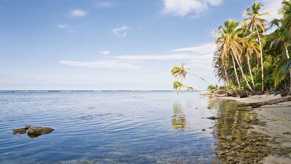 Le parc naturel de Cahuita a été créé en 1978 pour protéger un paysage et un récif corallien d'une beauté saisissante. Mais Cahuita est menacé par la pollution aux pesticides qui ruisselle des plantations de bananes.