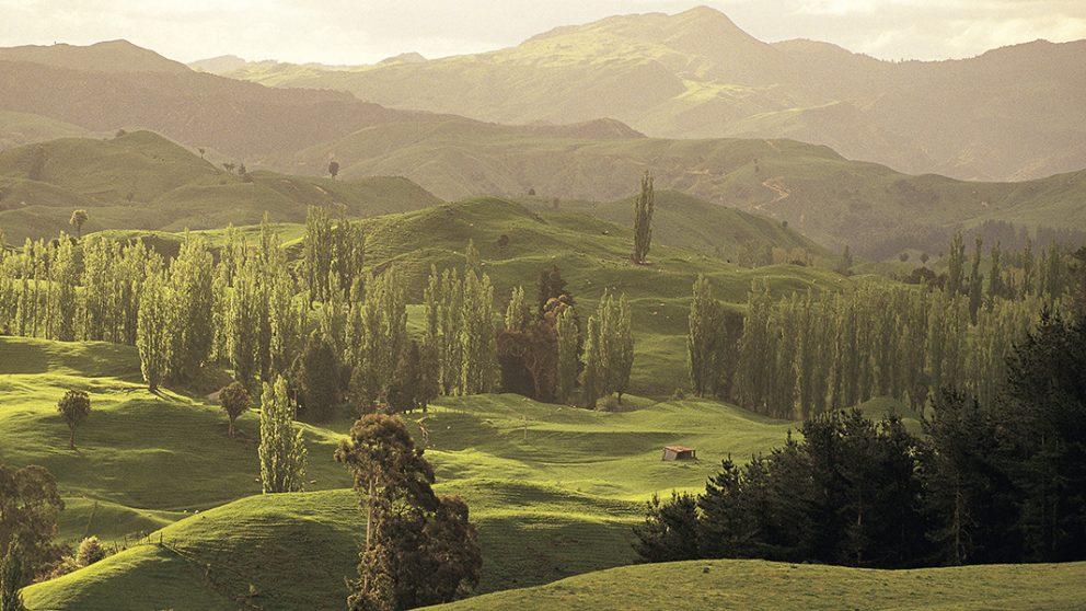 L'arboretum d'Eastwoodhill. On y trouve, sur 70 hectares, 4 000 arbres originaires de l'hémisphère Nord.
