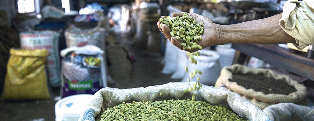La cardamome, « grain du paradis ». Cette épice, autrefois utilisée comme offrande dans les temples hindous, il y a plus de 2 000 ans, est toujours employée comme ingrédient dans le thé, la cuisine et même la médecine traditionnelle.
