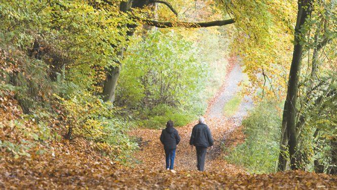 Se promener dans les bois. Une activité simple, aux multiples bénéfices.