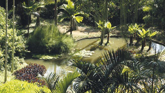 Un des « tableaux végétaux » de Roberto Burle Marx. Paysagiste et défricheur, il a acclimaté à son jardin des espèces découvertes à travers tout le Brésil.