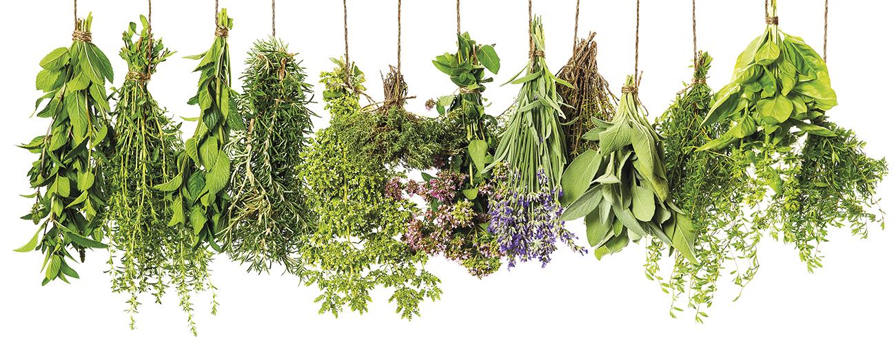 Les plantes sauvages, fraîches ou séchées. Un plaisir gratuit et à portée de main presque toute l'année !