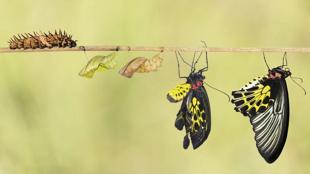 Être ou changer, il faudrait choisir. Changer, ce n'est pas être remplacé, ce n'est pas cesser d'être soi, c'est être soi autrement.