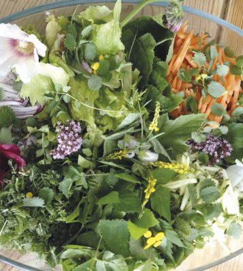 Un stage de « gastronomie sauvage ». Il permet de connaître une vingtaine de plantes comestibles avant de les accommoder de multiples façons.