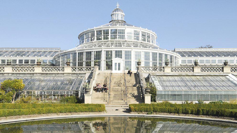 La grande serre aux palmiers de Copenhague. Modernisée en 1980, cette serre de 94 mètres s'est inspirée entre autres serres, du Crystal Palace de Paxton.