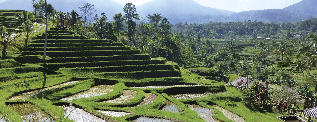 Les rizières de Munduk dans le centre de Bali. Sous le soleil brûlant, elles deviennent étincelantes.