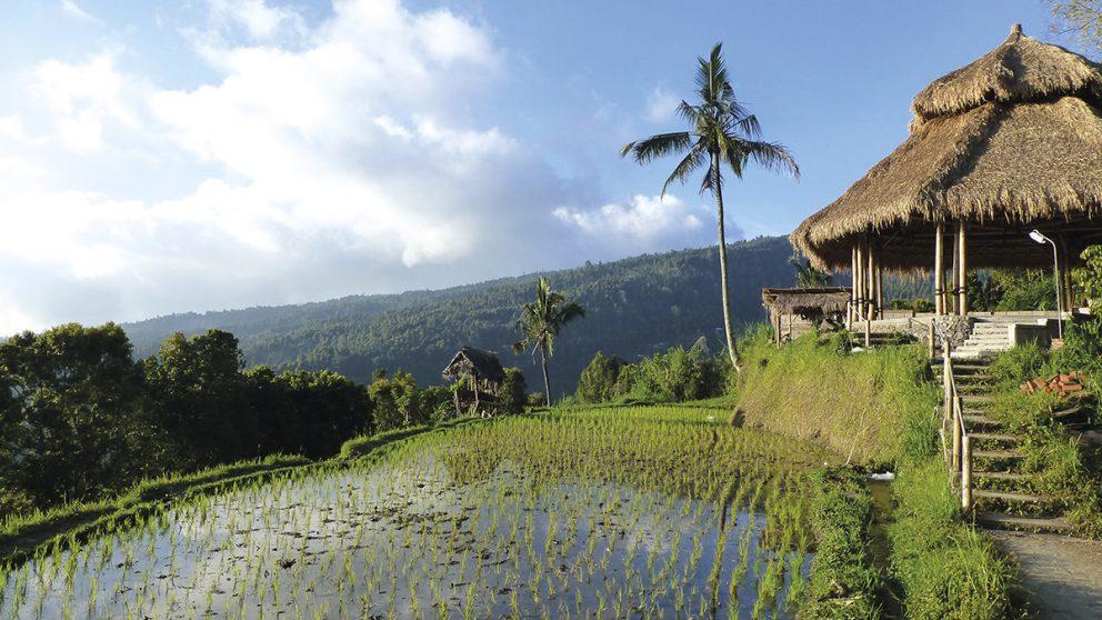 Les rizières de Puri Lumbung, près de Munduk, dans le centre de Bali.