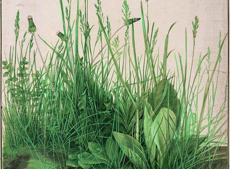 « La Grande touffe d'herbes »